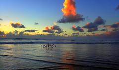 The FLIGHT of the BIRDS at Sunset (Lani Elliott) Tags: lanielliott lani elliottlani nature naturephotography beach sand oceanbeach birds sky skies cloud clouds sunset water sea ocean waves australia tasmania strahan cffaa