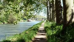 L'arrivée à l'écluse d'Ariège (brigeham34) Tags: balade avril printemps beautemps canaldumidi eau chemindehalage reflets platanes ombreetsoleil éclusedariège péniche pontdela9 promeneurs villeneuvelesbéziers hérault occitanie france eu fz45