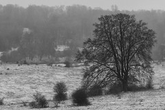 _DSC1553-Edit.jpg (garybirney) Tags: tring trees buckinghamshire landscape winter tringpark halton sleet snow
