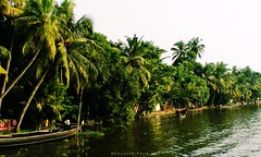 Evening in the Backwaters (Shrayansh Faria Photography) Tags: waters tropical trees coconut backwaters