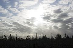 Morning light (Martijn A) Tags: morning ochtend light licht sun zon early vroeg spring lente sky lucht clouds wolken canon 550d dslr eos ef35mmf2isusm wwwgevoeligeplatennl