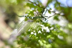 Windchimes (LensbabyLindsay) Tags: windchimes lensbaby lensbabies tree green bokeh