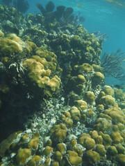DSCF1315 Snorkeling Costa Maya Mexico (bermudafan8) Tags: 2017 spring break bermudafan8 mexico caribbean snorkeling water sea