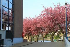 IMG_4846 (Kanok) Tags: nld netherlands tripaboard tulipcruise zuidholland geo:lat=5188859833 geo:lon=463692500 geotagged kinderdijk