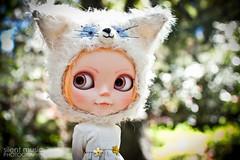 Mr. Anai kitty