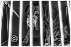 Hinter Gittern / Behind prison bars