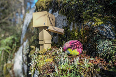 Easter hunt pt. 4 (siljevdm) Tags: nature forest easter natural egg adventure explore hunt danbo danboard danbosadventure