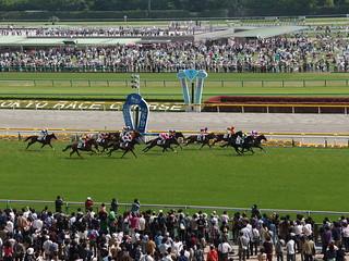 Horse racing @ Tokyo Race Course @ Fuchu