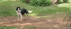 Panda (Pablo Basile) Tags: brasil canon natureza bonito pablo pb serra cachoeira feriado paraíso ribeirão basile t2i
