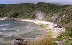 Calcarenite cliffs with Kentia Palms (Howea forsteriana) (Poytr) Tags: lordhoweisland calcarenite middlebeach middlebeachlordhoweisland howeaforsteriana poem