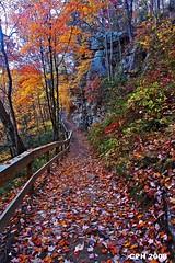 597) Rising Fawn GA, Cloudland Canyon - walkway to Daniel Creek Falls 1/Cherokee Falls [303] (Houckster) Tags: autumn fall ga georgia walkway 2008 photostream 303 dadecounty 30738 cloudlandcanyonstatepark risingfawnga sonydslra700 tamron11184556 cherokeefalls houckster danielcreekfalls1 122cloudlandcanyonparkroad