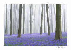 Micheldever Bluebells (George-Edwards) Tags: wood uk morning trees light england sun mist nature fog bluebells forest sunrise woodland landscape dawn countryside spring hampshire rays beech 2014 micheldever georgeedwards