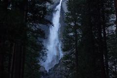 lower falls (Dan Forzano) Tags: california ca trees usa us waterfall nationalpark yosemitenationalpark