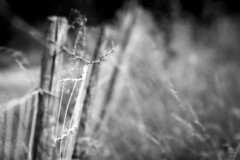 Fence (mexou) Tags: meadow luxembourg wormeldange 135mmf2 koeppchen