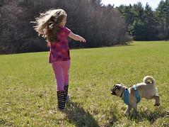 2014.04.19-15.44.44 (Pak T) Tags: dog kat pug bennett zuikodigital olympus1260mm