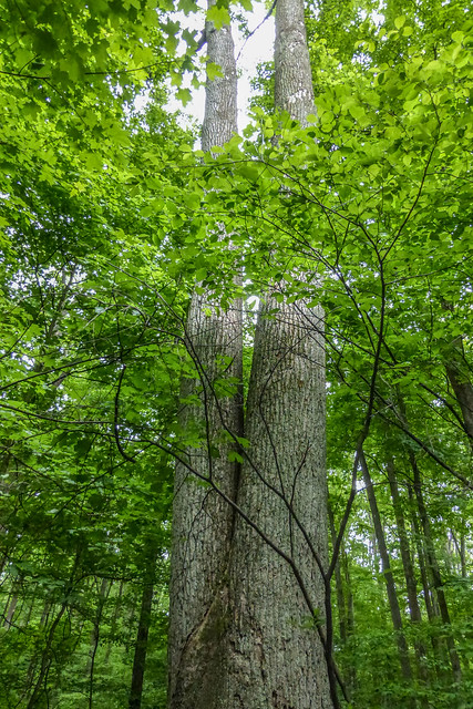 McCormick's Creek State Park - Wolf Cave Nature Preserve - May 24, 2014