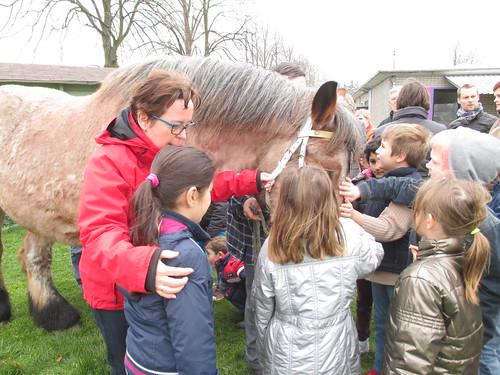 Boerenpaard op school