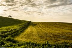 Freshly cut. (AlbOst) Tags: sunrise cut fields mowed lightandshade greenbeautyforlife