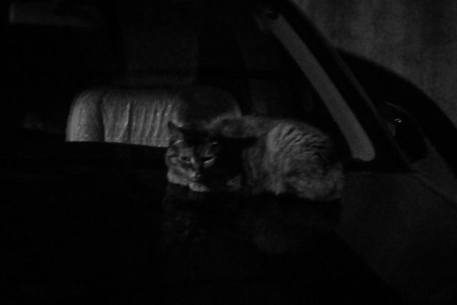 Today's Cat@2014-06-06