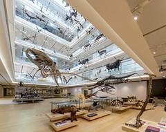 Inside MUSE