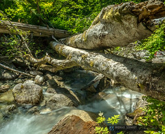 2014-06-17 Squamish Shannon Falls Creek-1 (Michael Schmidt Photography Vancouver) Tags: longexposure trees orange brown white mountain black green water pool yellow creek botanical grey log beige rocks logs fallen howesound flowing bushes pictureperfect shannonfalls cascading highway99 seatoskyhighway runoff squamishbc shannonfallsprovincialpark shannoncreek mounthabrich michaelschmidtphotographyvancouverbc wwwmichaelschmidtphotographycom httpwwwflickrcomphotosdmichaelschmidtsets dmschmidtshawca httpswwwfacebookcommsphotographyvancouver httpswwwthisiswhatiseeca michaelmspixca salesmspixca httpsplusgooglecomb115575222591610367933115575222591610367933posts httpstwittercommspixvancouver mountskypilot
