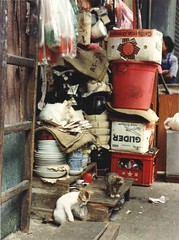 One paw in a plastic bag, two kittens playing on the street observed by their furry white mama cat sleeping on papers, plates and bowls, cooking pots, store, California oranges box, Kowloon, Hong Kong, 1990 (Wonderlane) Tags: hongkong store kowloon 1990 cookingpots ninedragons platesandbowls onepawinaplasticbag twokittensplayingonthestreetobservedbytheirfurrywhitemamacatsleepingonpapers californiaorangesbox