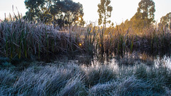 A Frosty Morning at the Pond (markbev99) Tags: morning lake ice pond frost warmth sunny australia frosty ballarat