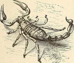Anglų lietuvių žodynas. Žodis spiny-stemmed reiškia spygliuota-kilo lietuviškai.