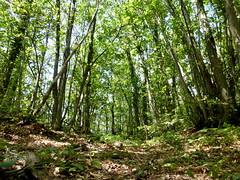 P1000023x (gzammarchi) Tags: italia natura campagna albero montagna paesaggio monti bosco camminata itinerario inalto firenzuolafi monteporara
