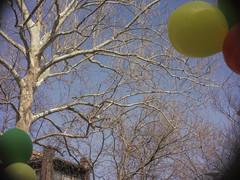 2.balloons (the.crystalimage) Tags: trees balloons pentax lofi stlouis cine 8mm adapt vintagelens movielens mirrorless dmount justpentax adaptedlens cinelens kernpaillard pentaxart mirrorlesscamera pentaxq pentaxmirrorless yvarkernpaillard125mmf25 moviecameralens