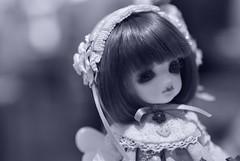 小花妹妹(百花-Momoka) (小櫻兒) Tags: bjd cocoa rosenlied 201407 小花妹妹 ~meeting140726~