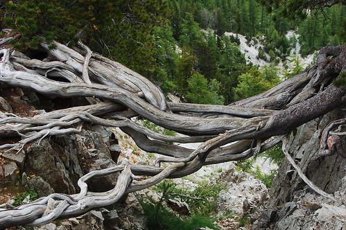 racines dans le vide