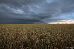 Arcus du Soir (NeoNature) Tags: sunset wild sky cloud storm france nature weather canon landscape scenery pluie science shelf ciel convection nuage paysage calvados florent orage champ meteorology bl renaut mtorologie arcus convective