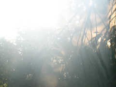 Let me in. (Autumn's Lull) Tags: light sun abstract soft ethereal ambient dreamy