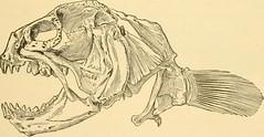 Anglų lietuvių žodynas. Žodis zoarcidae reiškia <li>zoarcidae</li> lietuviškai.