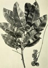 Anglų lietuvių žodynas. Žodis rhus rhodanthema reiškia mezokarpo rhodanthema lietuviškai.
