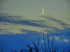 Last night's moon: Waxing Crescent (peggyhr) Tags: blue trees sky moon white canada black clouds silhouettes alberta waxingcrescent 25faves peggyhr bluebirdestates ♣myhatsofftoyou dsc04032a