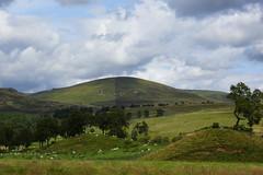 Half and half hill. (artanglerPD) Tags: trees sky green clouds sheep heather hills