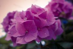 2014-08-02-Garten-Helmshagen-RX100-20140802-071330-i151-p0023-DSC-RX100M3-8.8_mm-.jpg
