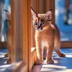 ✰ Featuring Sergey Polyushko ✰ -Explore @sergey_polyushko here... (flavoredtape) Tags: animaladdicts animals babyanmals caracal cat little mastershots natgeo natgeoru nature sp