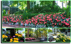 City in the Springtime - downtown Vancouver (FernShade) Tags: vancouver britishcolumbia canada westcoast pacificnorthwest cityscape scenery scenic flowers springscenery urbanflowers urbanscenery