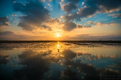 Sunrise over crawfish field (jciv) Tags: sunrise crawfish field pond crawfishfarming farm clouds