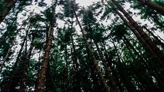 #九天森林 (David C W Wang) Tags: 台中 台灣 九天森林 taichung taiwan sonyz5 森林