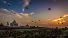 Taj Sunset - Agra, India (Kartik Kumar S) Tags: tajmahal taj agra uttarpradesh india sunset birds clouds canon 600d tokina 1116mm