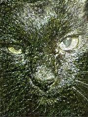 Assam as Seaweed/Nori (sjrankin) Tags: 2april2017 edited animal cat assam closeup california northerncalifornia processed filtered seaweed nori food