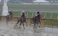 "2017-03-31 (20) r3 Horacio Karamanos on #2 Mid Ocean (JLeeFleenor) Tags: photos photography md maryland marylandracing marylandhorseracing laurelpark horseracing jockey جُوكِي ""赛马骑师"" jinete ""競馬騎手"" dżokej jocheu คนขี่ม้าแข่ง jóquei žokej kilparatsastaja rennreiter fantino ""경마 기수"" жокей jokey người horses thoroughbreds equine equestrian cheval cavalo cavallo cavall caballo pferd paard perd hevonen hest hestur cal kon konj beygir capall ceffyl cuddy yarraman faras alogo soos kuda uma pfeerd koin حصان кон 马 häst άλογο סוס घोड़ा 馬 koń лошадь"