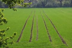 Spuren - Tracks (ivlys) Tags: hessen erfelden deich dyke hessischesried altrhein rhein fluss river feld field spur track landschaft landscape nature ivlys