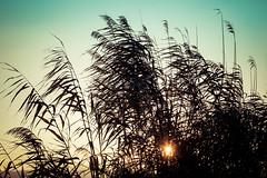 Camargue Dream Sunset (NathalieSt) Tags: camargue coucherdesoleil europe fz1000 france gard languedocroussillon legrauduroi lumix lumixfz1000 panasonic sunset languedocroussillonmidipyrén languedocroussillonmidipyrénées fr