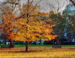 LONDON (toyaguerrero) Tags: londres london england greatbritian uk reinounido granbretaña inglaterra autumn otoño stjamesspark maríavictoriaguerrerocatalán toyaguerrero
