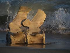 Show Some Backbone (Tantivy_J) Tags: backbone marinemammal cetacean shoreline coastline surf sand beach bone zoology skeleton naturalhistory coolfind katama washashore vertebrae whale whalebone